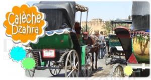 Une calèche à Dar Dzahra